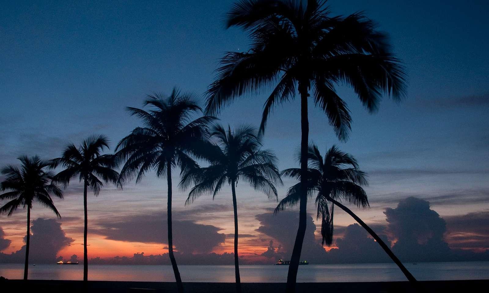 Buscando No Mulheres Livres Fort Lauderdale-91779